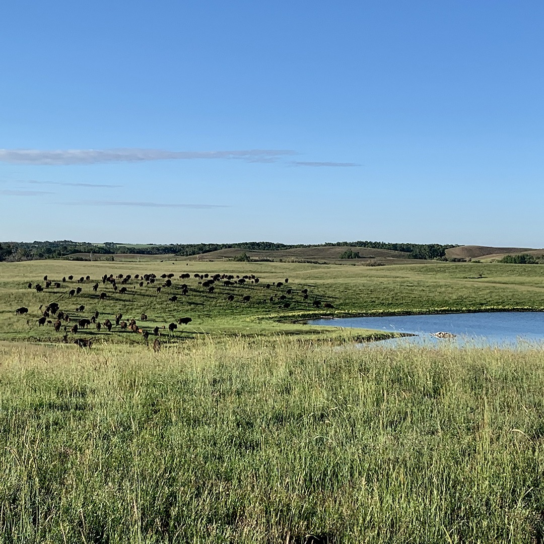 The Future is Sustainable Ranching article image