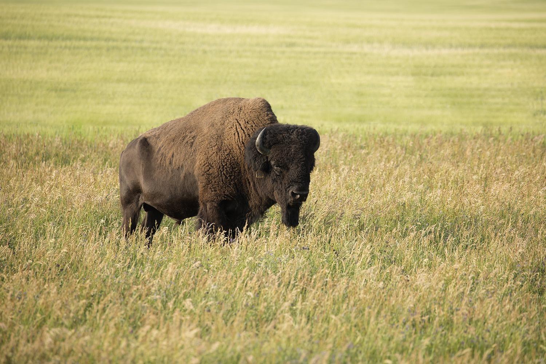 Taking the Bull by the Horns artikelbild